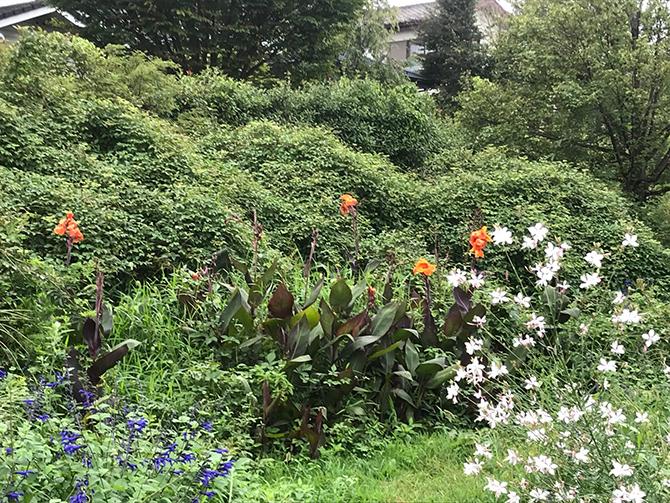 200種類を超える花・ハーブ・香木